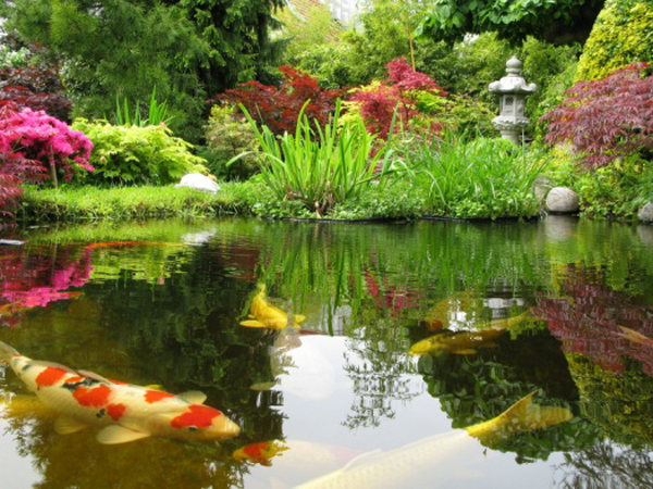 Landscaping in Lancashire by World of Hedges build Koi Carp Ponds in Lancashire